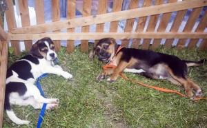 Zbog pirotehnike u Dumovcu završio 21 pas