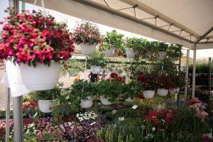 Međunarodna izložba Floraart od 13. do 19. svibnja na Bundeku