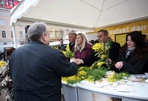 Mimoze zavladale Cvjetnim trgom