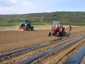 PLODOVI FRUCTUS: Javni poziv kooperantima za sadnju krastavaca