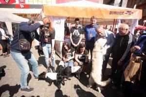 U Zagrebu raste broj udomljenih pasa